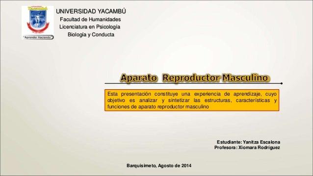 Aparato Reproductor Masculino Slide 2