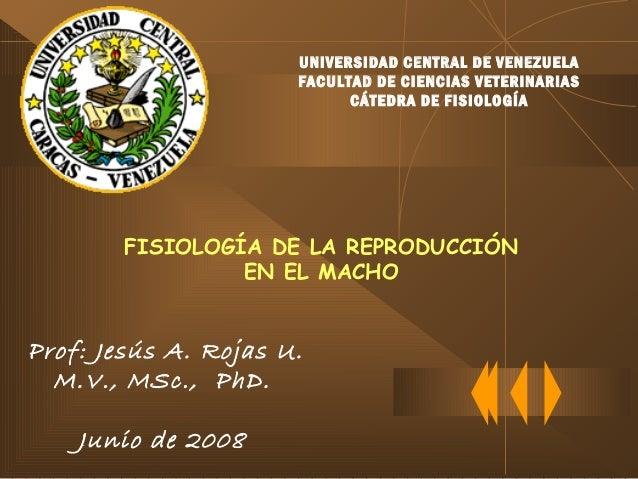 FISIOLOGÍA DE LA REPRODUCCIÓN EN EL MACHO Prof: Jesús A. Rojas U. M.V., MSc., PhD. Junio de 2008 UNIVERSIDAD CENTRAL DE VE...