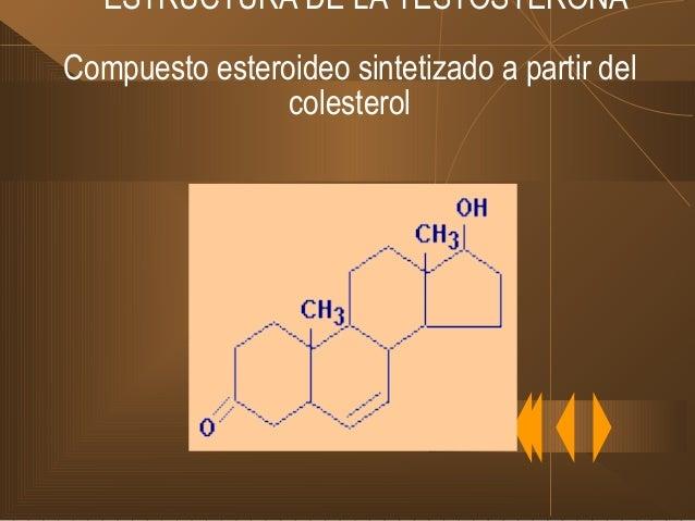 SÍNTESIS Y METABOLISMO DE LA TESTOSTERONA TESTOSTERONA Se une a albúminas o β- globulinas plasmáticas Se fija a tejidos De...