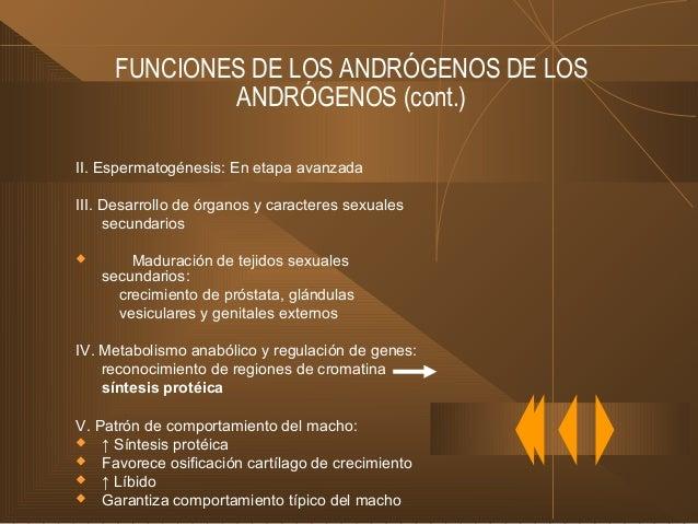 ACCIONES DE LA TESTOSTERONA (cont.) En el adulto:  ↑ Tamaño genitales externos  Distribución del pelo, calvicie  Efecto...