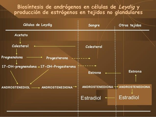 ESPERMATOGÉNESIS, ESPERMATOCITOGÉNESIS Y ESPERMIOGÉNESIS Espermatogénesis: ∑ de procesos evolutivos que culminan con la fo...
