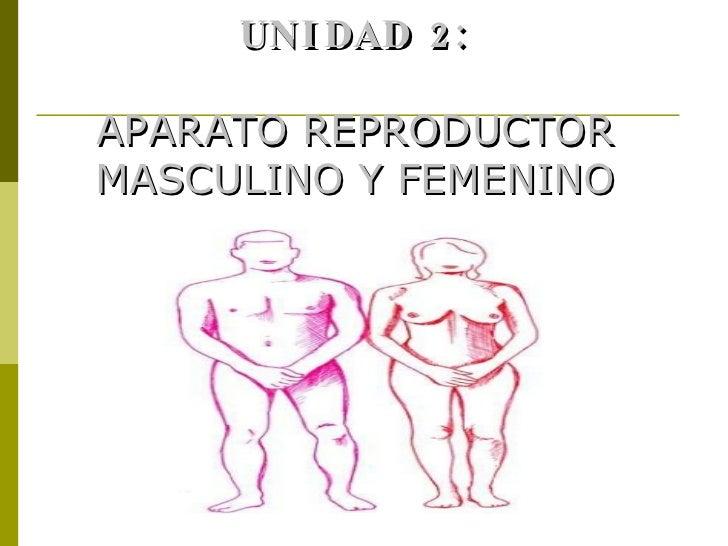 UNIDAD 2: APARATO REPRODUCTOR MASCULINO Y FEMENINO