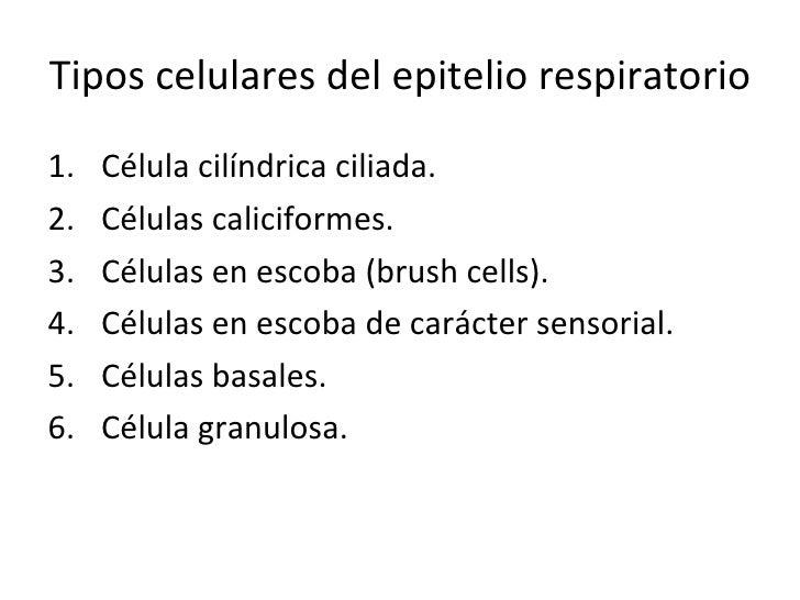 Tipos celulares del epitelio respiratorio <ul><li>Célula cilíndrica ciliada. </li></ul><ul><li>Células caliciformes. </li>...