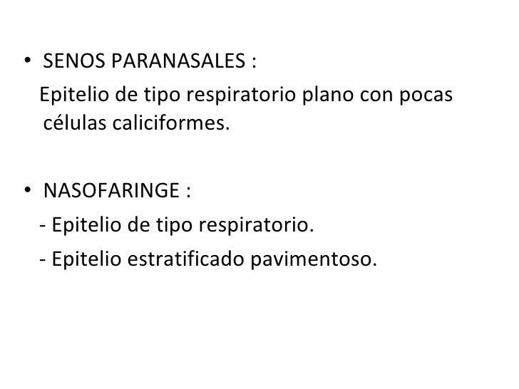 <ul><li>SENOS PARANASALES : </li></ul><ul><li>Epitelio de tipo respiratorio plano con pocas células caliciformes. </li></u...