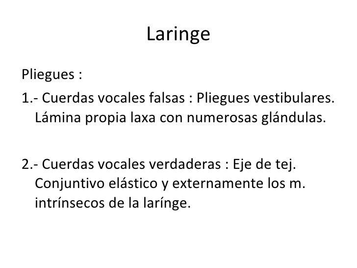 Laringe <ul><li>Pliegues : </li></ul><ul><li>1.- Cuerdas vocales falsas : Pliegues vestibulares. Lámina propia laxa con nu...