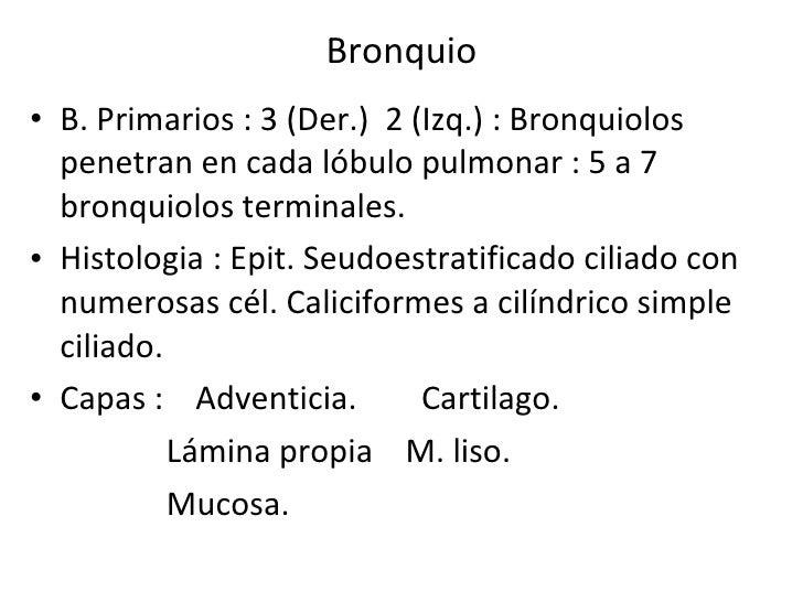 Bronquio <ul><li>B. Primarios : 3 (Der.)  2 (Izq.) : Bronquiolos penetran en cada lóbulo pulmonar : 5 a 7 bronquiolos term...
