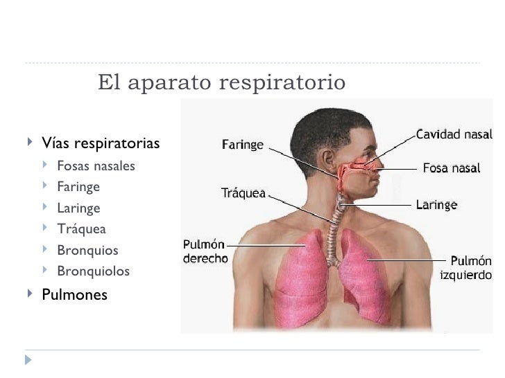 generalidades del aparato respiratorio