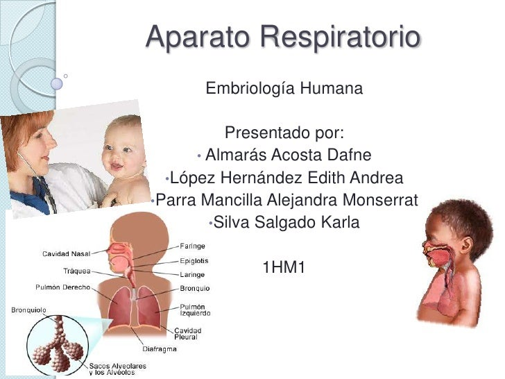 Higiene Del Sistema Respiratorio: Aparato Respiratorio Embrionario