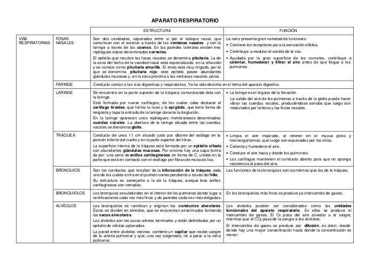 APARATO RESPIRATORIO                                                          ESTRUCTURA                                  ...