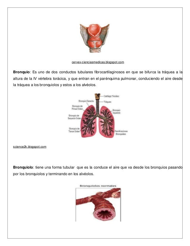 Único Imágenes De Los órganos Dentro Del Cuerpo Humano Cresta ...
