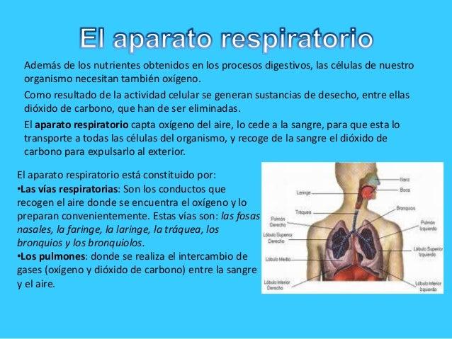 Además de los nutrientes obtenidos en los procesos digestivos, las células de nuestroorganismo necesitan también oxígeno.C...