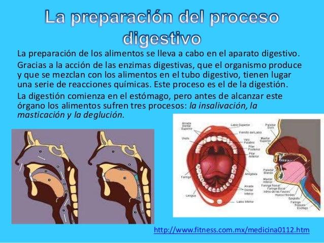 La preparación de los alimentos se lleva a cabo en el aparato digestivo.Gracias a la acción de las enzimas digestivas, que...