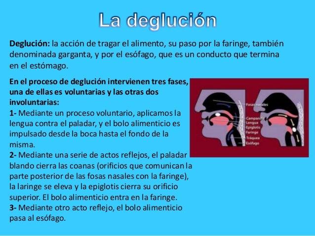 Deglución: la acción de tragar el alimento, su paso por la faringe, tambiéndenominada garganta, y por el esófago, que es u...