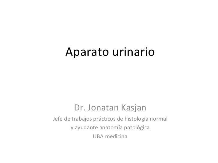 Aparato urinario Dr. Jonatan Kasjan Jefe de trabajos prácticos de histología normal y ayudante anatomía patológica  UBA me...