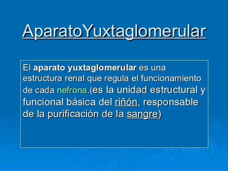 AparatoYuxtaglomerular El  aparato yuxtaglomerular  es una estructura renal que regula el funcionamiento de cada  nefrona ...
