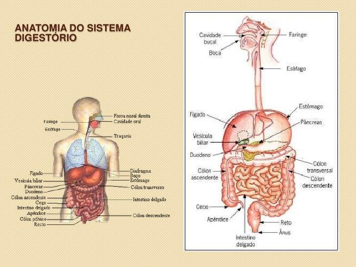 Dorable Anatomía De La Fonación Molde - Anatomía de Las Imágenesdel ...