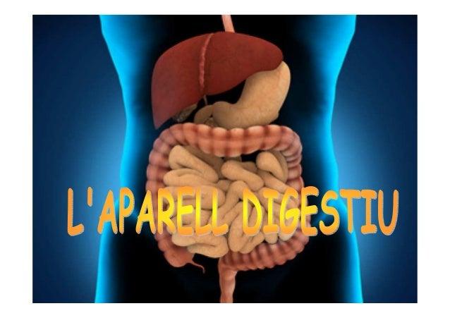 L'APARELL DIGESTIU Parts: •Tub Digestiu Glàndules annexes Funcions: •Digestió (transformació d'aliments en nutrients) •Abs...
