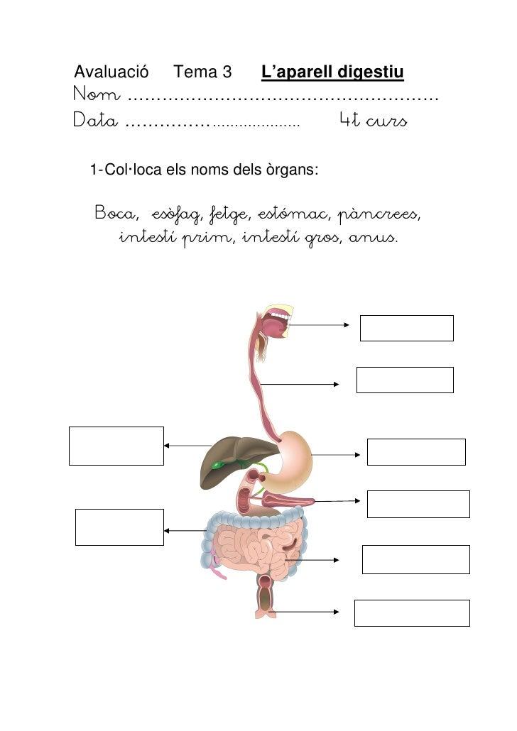 Avaluació Tema 3 L'aparell digestiuNom ………………………………………………Data ……………....................        4t curs  1- Col·loca els no...