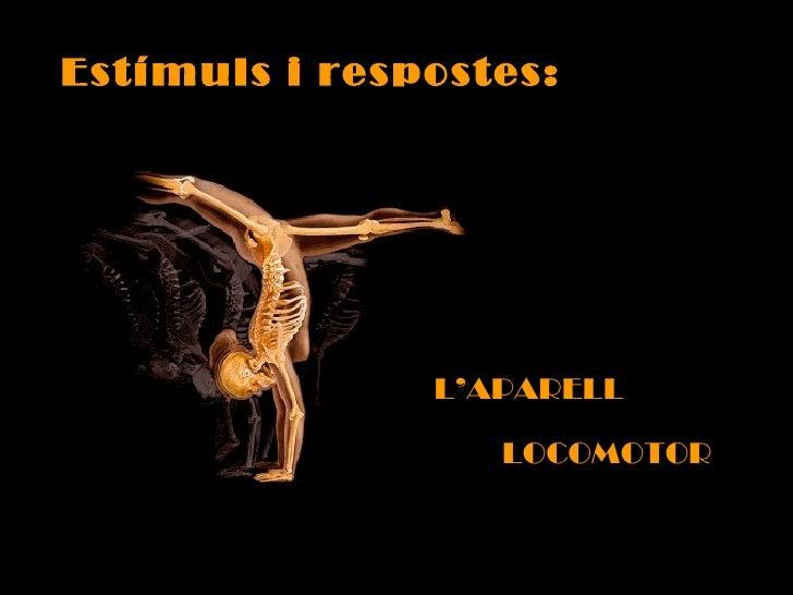 Estímuls i respostes: L'APARELL LOCOMOTOR