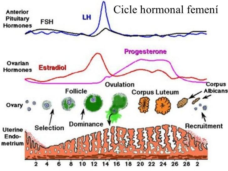 Cicle hormonal femení
