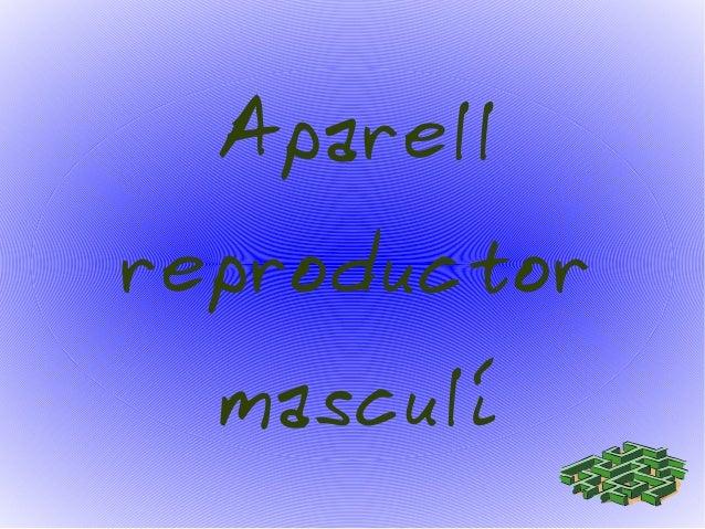 Aparell  reproductor  masculí