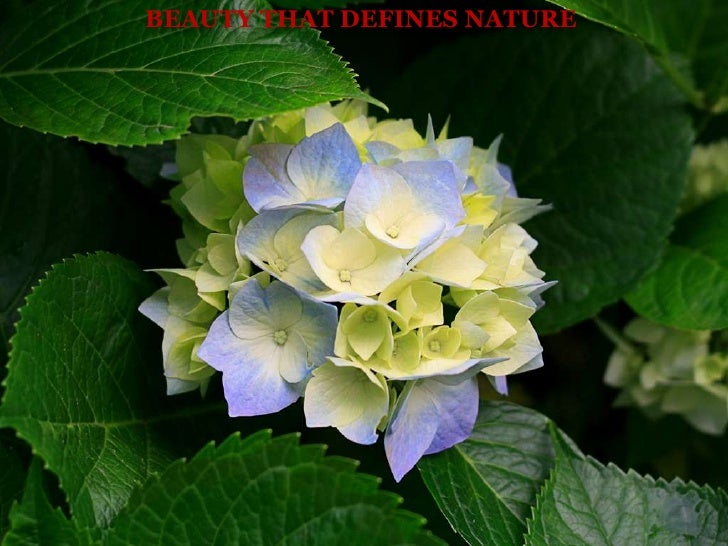 Beauty That Defines Nature<br />