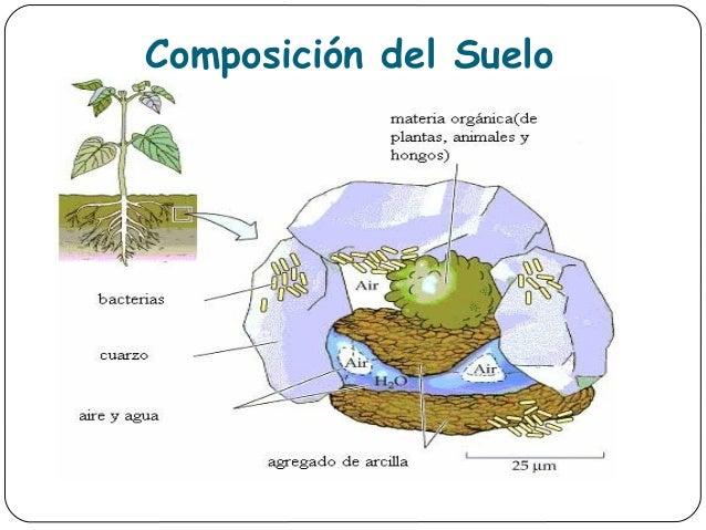 Apartado 1 for Componentes quimicos del suelo