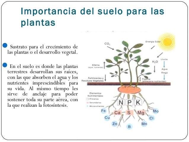 Apartado 1 for Importancia de los suelos