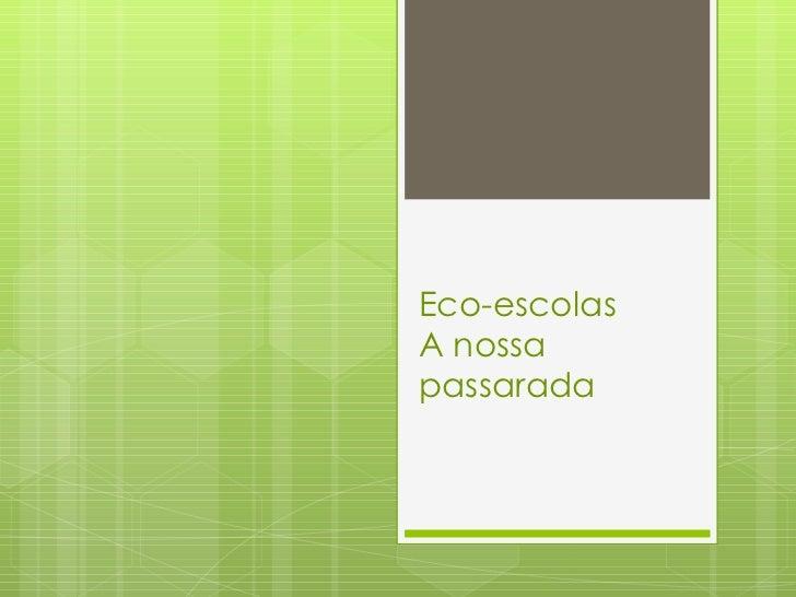 Eco-escolas A nossa passarada
