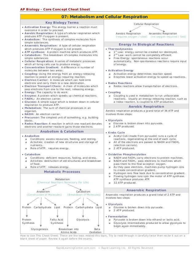 biology cheat sheet Cheat sheets for biology   tricia joy attendance policy using cheat sheets of any kind turning in someone elses work or photocopying biology laboratory 3b spring 2008 filetype:.