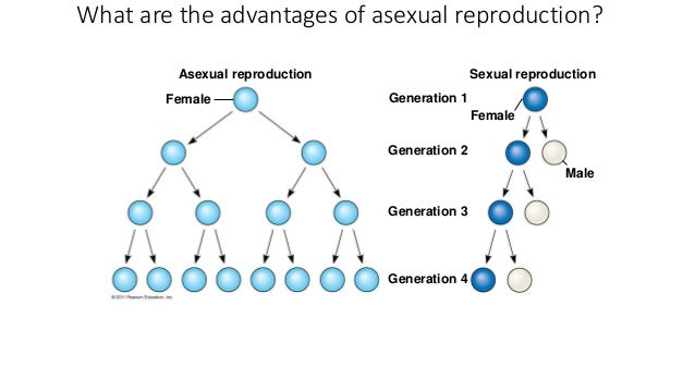 Compare and contrast asexual and sexual reproduction ap bio