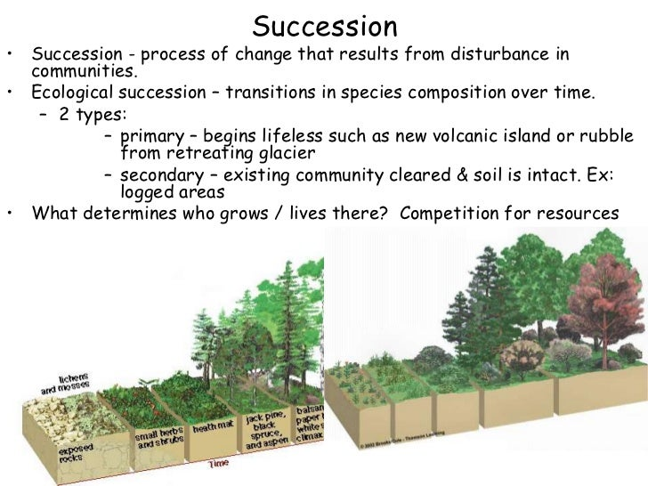 Ap Bio Ch 37 Communties Amp Ecosystems Ppt