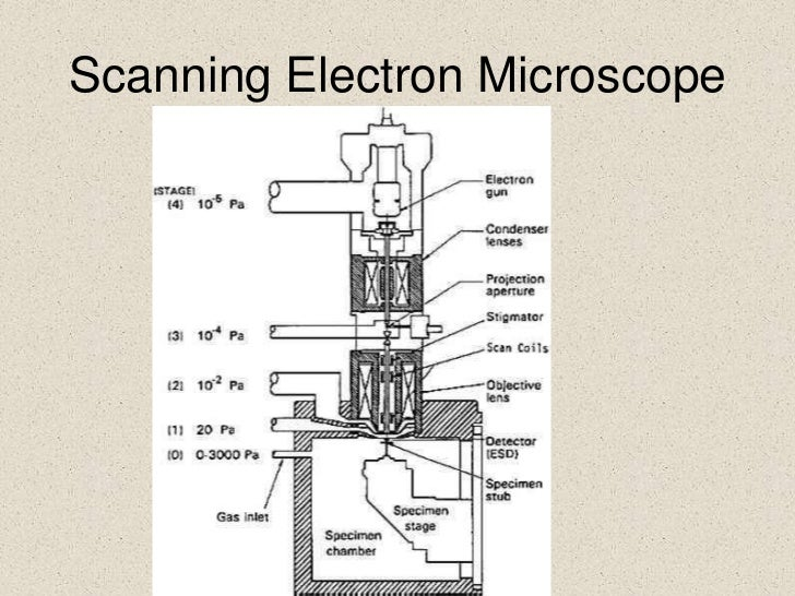 scanning electronmicroscope