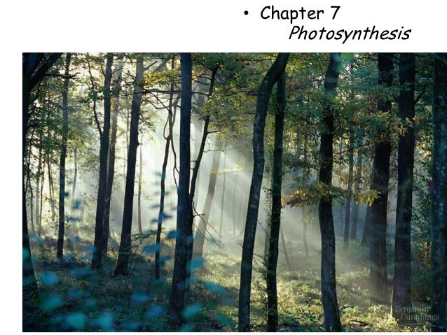 • Chapter 7     Photosynthesis