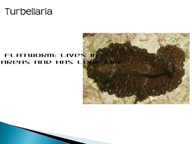 ap biology sea slug essay Ap biology questions information on each of the following a sea slug that lives in an ap biology essay questions page 28 found on an.
