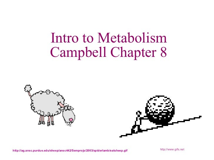 Intro to Metabolism Campbell Chapter 8 http://www.gifs.net http://ag.ansc.purdue.edu/sheep/ansc442/Semprojs/2003/spiderlam...