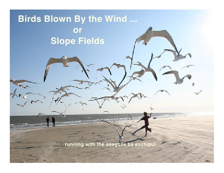 Birds Blown By the Wind ...             or        Slope Fields               running with the seagulls by eschipul