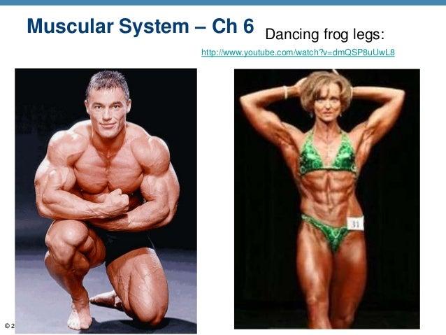 Muscular System – Ch 6                 Dancing frog legs:                                 http://www.youtube.com/watch?v=d...