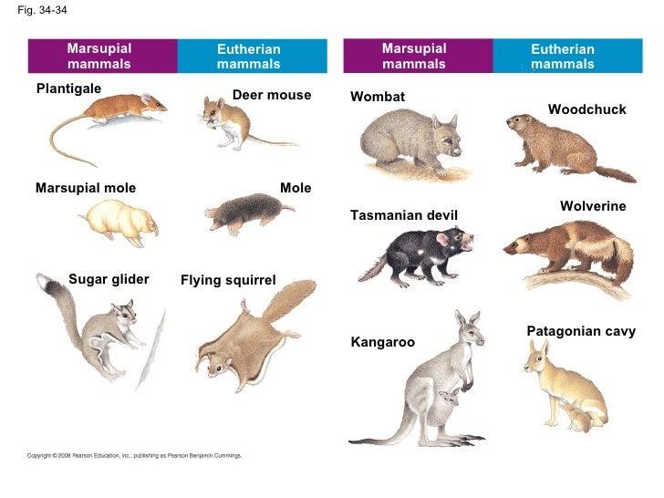 ap chap 34 the vertebrates