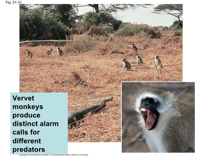 theories for the evolution of alarm calls As christian writers have defended the biblical view of the creation by intelligent design instead of by evolution,  prairie dog language  alarm calls of.
