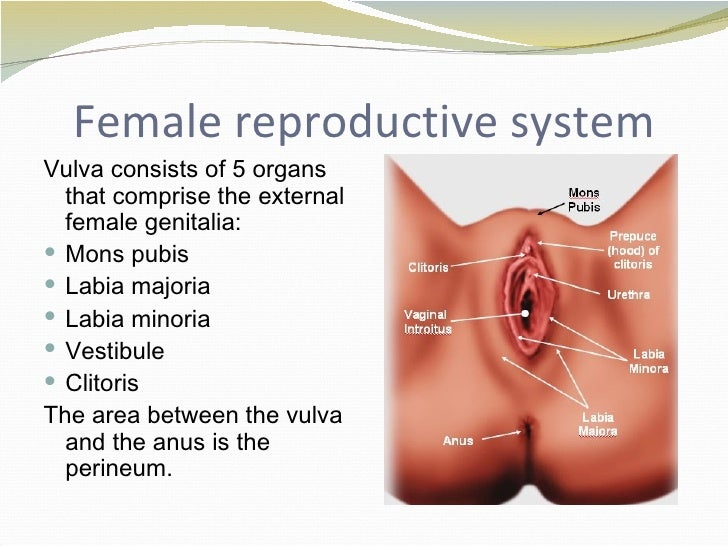 A&P Chapter 31 The Reproductive System