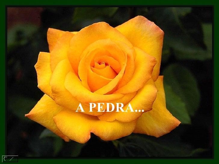 A PEDRA...