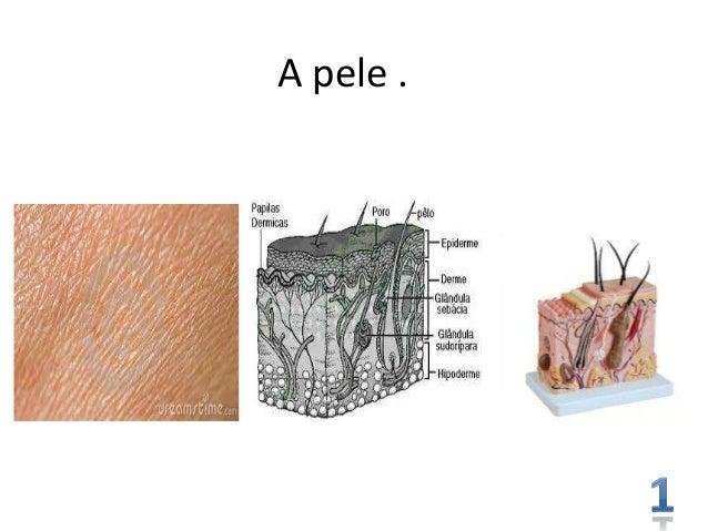 A pele .