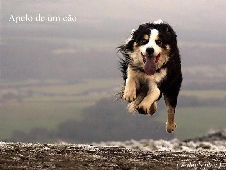 Apelo de um cão ( A dog's plea )