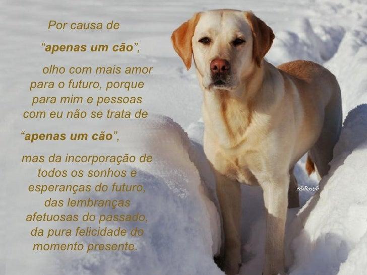 Despedida De Um Cão: É Apenas Um Cão