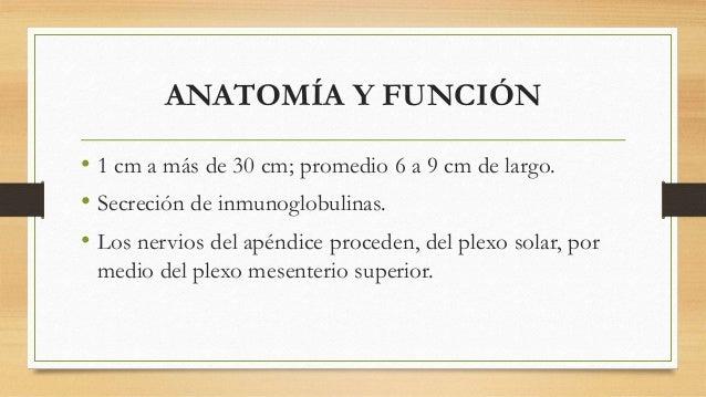 ANATOMÍA Y FUNCIÓN  • 1 cm a más de 30 cm; promedio 6 a 9 cm de largo.  • Secreción de inmunoglobulinas.  • Los nervios de...