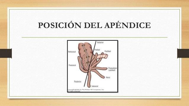 POSICIÓN DEL APÉNDICE