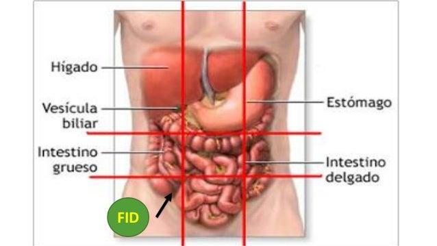 diabetes insípida fisiopatología central de la apéndice