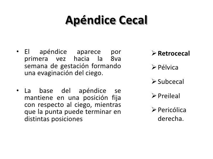 Apéndice Cecal• El apéndice aparece por            Retrocecal  primera vez hacia la 8va  semana de gestación formando    ...