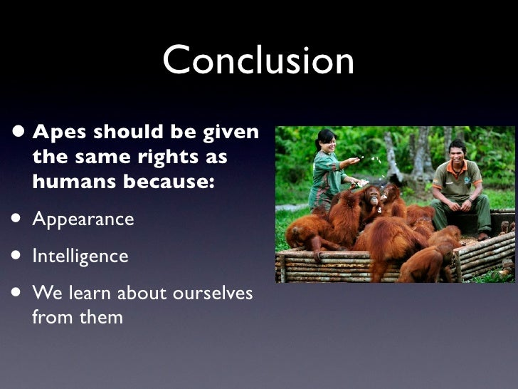 Conclusion • Apes should be given   the same rights as   humans because: • Appearance • Intelligence • We learn about ours...
